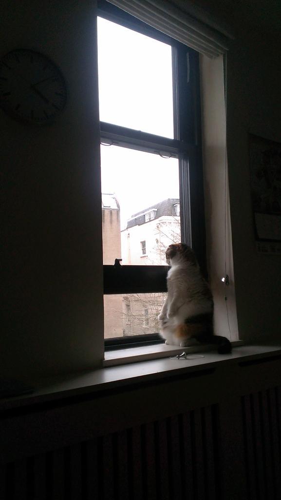 窓辺のさくら