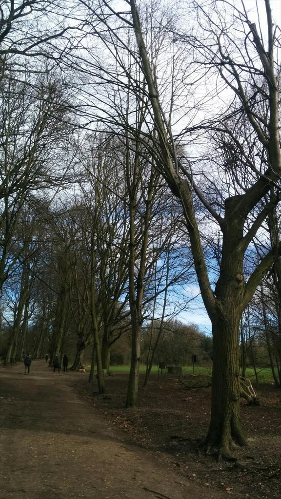 hampstead heath 3