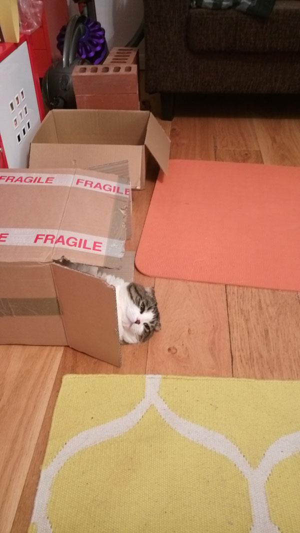 fragile 7