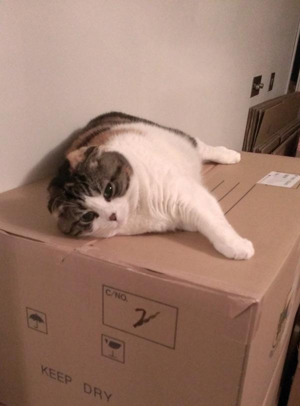 箱に乗って
