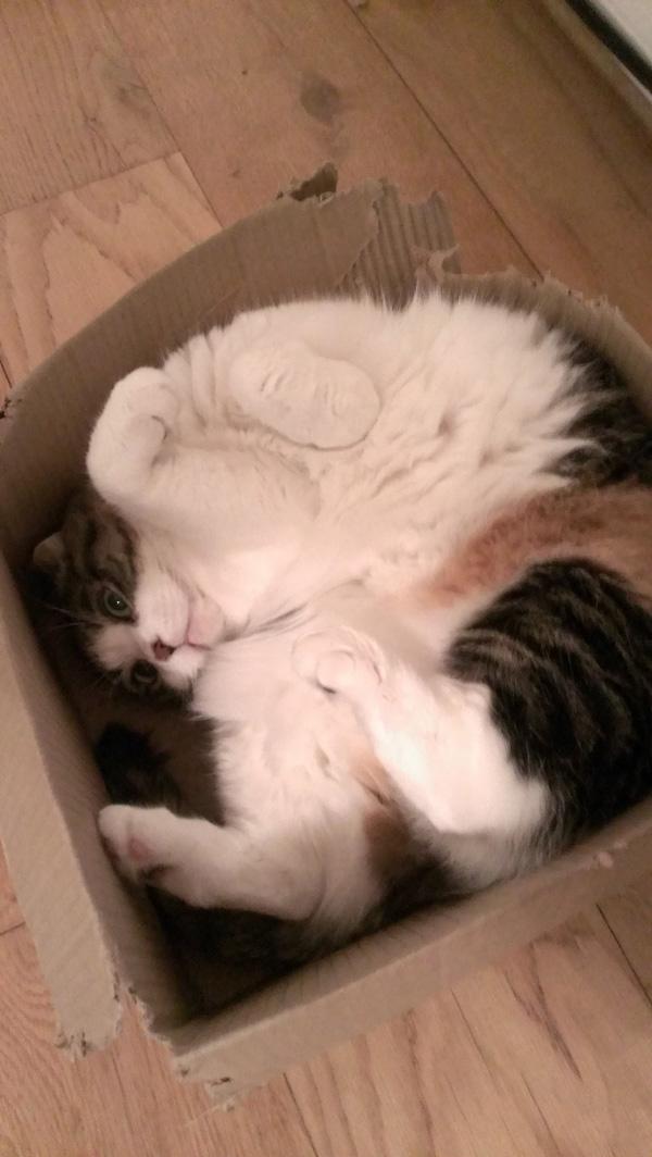 box cat2