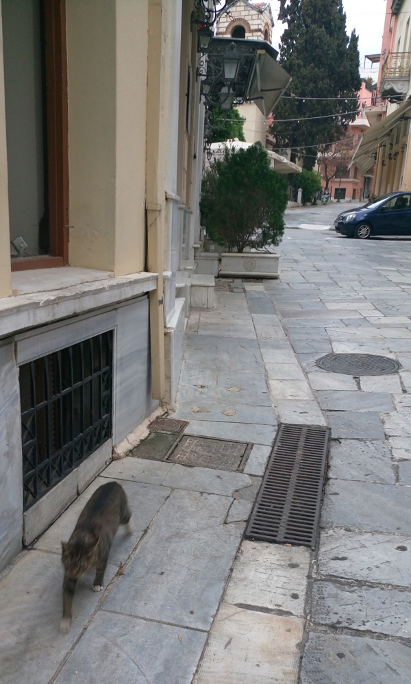cats in Athens 9
