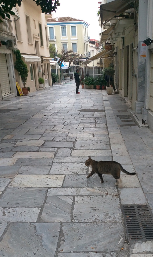 cats in Athens 11