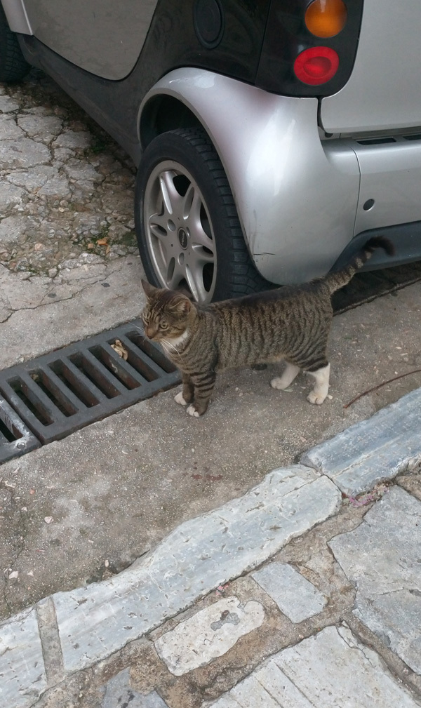 cats in Athens 7
