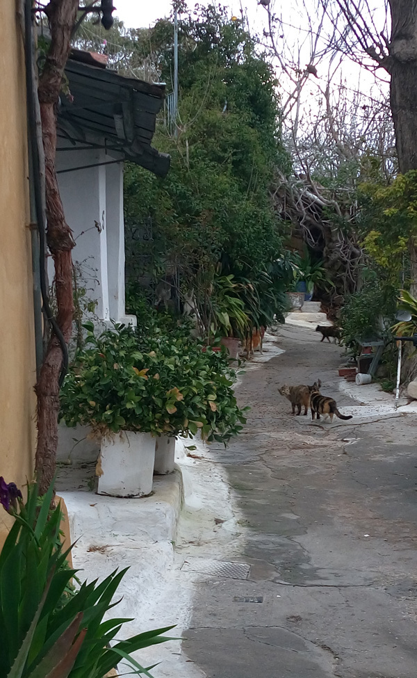 cats in Athens 1