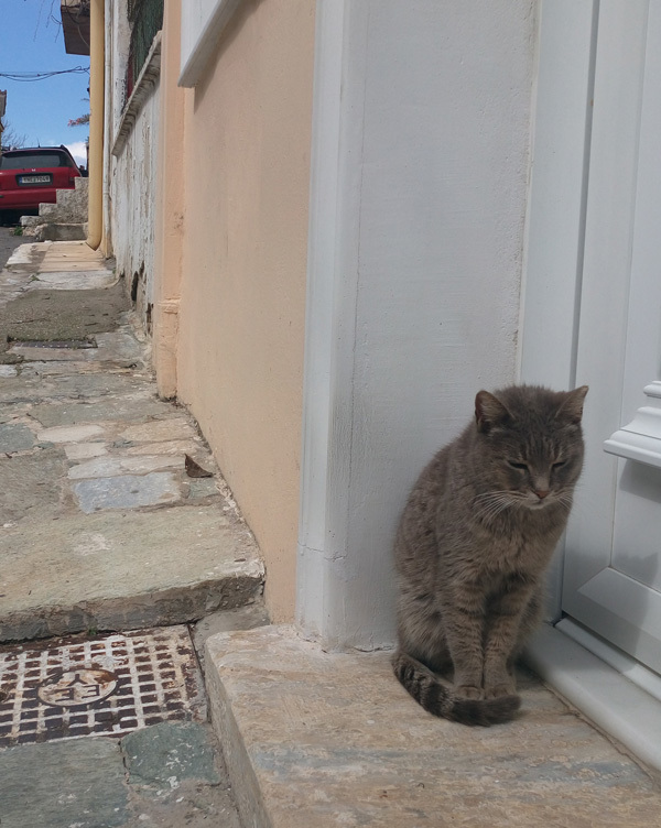 cats in Athens 13