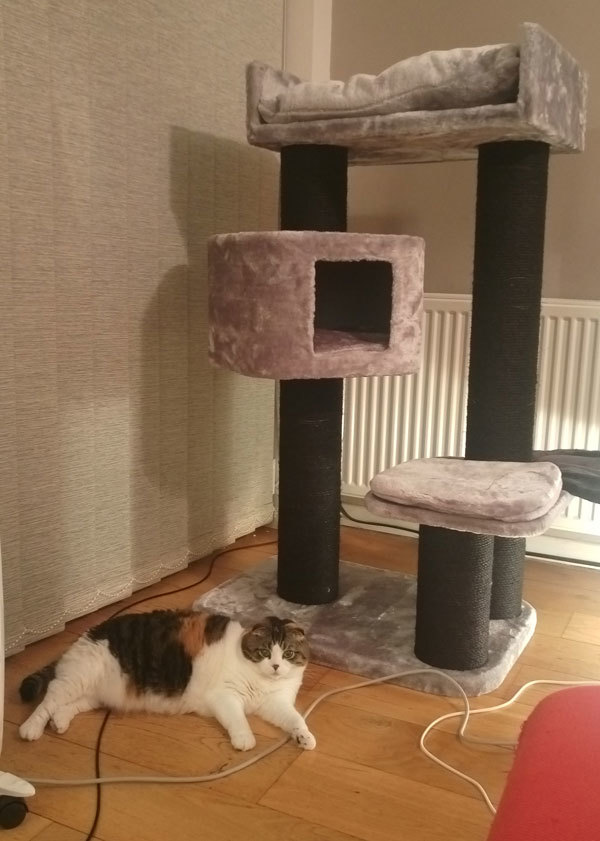 cat tower 5