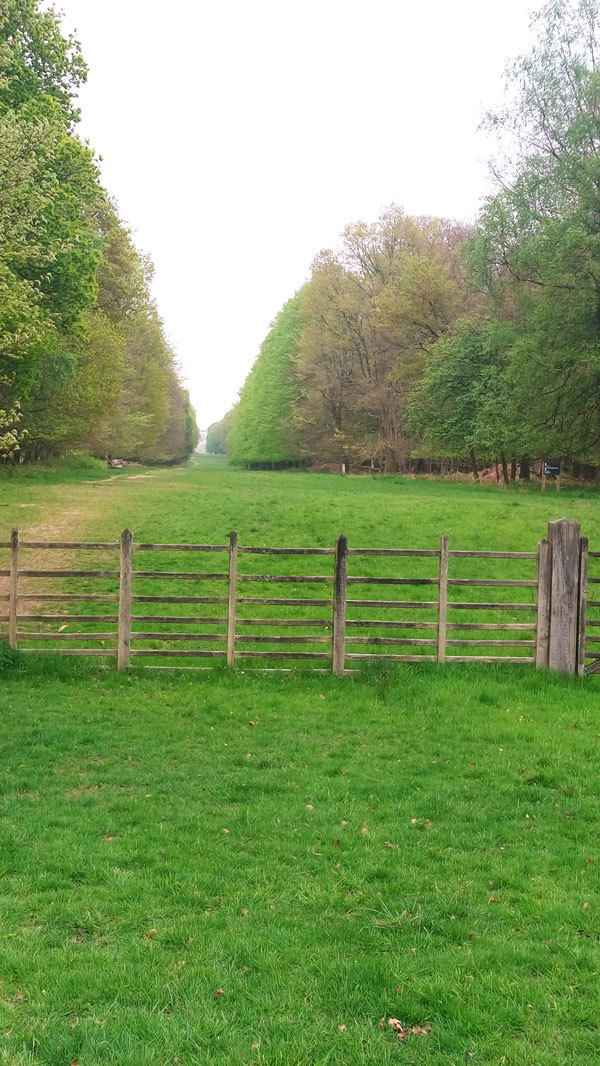 Ashridge walk 1