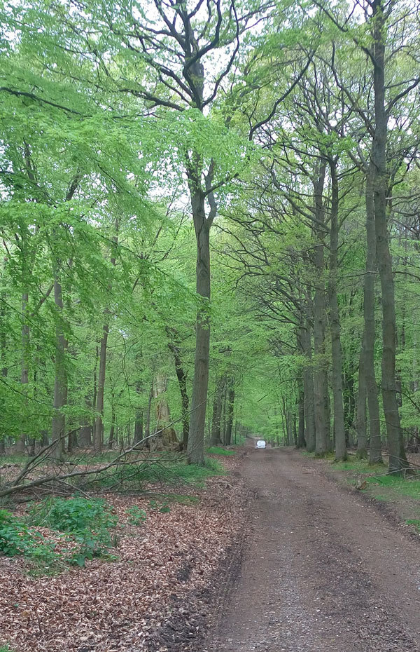 Ashridge walk 8